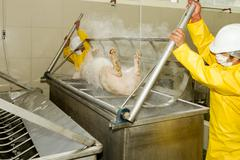 Workers Removing A Pig Carcass From Scalding Tub Using Human Power Operation Stock Photos