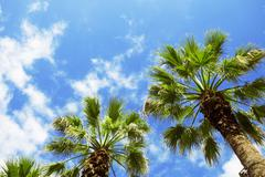Palm trees against blue sky. Stock Photos