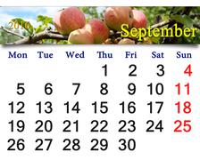 Calendar for September 2016 year with apples Stock Illustration