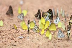 Group of  butterfly on the ground Stock Photos