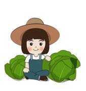 Stock Illustration of planter harvest cabbages