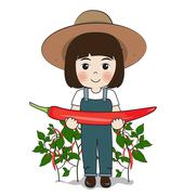 Planter harvest chilies Stock Illustration