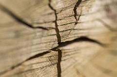 Stock Photo of Wooden log