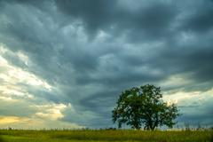 The thunderstorm sky by the field with green tree Stock Photos