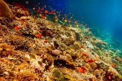 Underwater landscape with tropical fish Kuvituskuvat