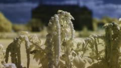 Dolly Move With Flowers In Whimsical And Dreamy Color Infrared 2K - stock footage