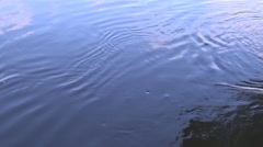 Perch caught, fishing Arkistovideo