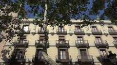 Beautiful trees along the las ramblas in barcelona city -spain Stock Footage
