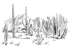 hand sketch American Desert - stock illustration
