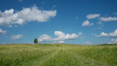 Lonely tree on blue sky and cloud background - stock footage
