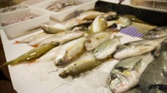 Giltheads sea breams in fish market, Portugal Stock Footage