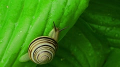 Snail on the leaf Stock Footage
