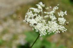 Flies on forest flower - stock photo