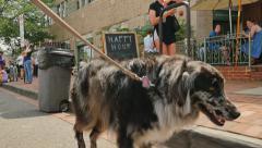 Man Walks Dog in Washington DC Neighborhood Arkistovideo