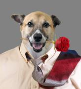 Handsome Doggy. - stock photo