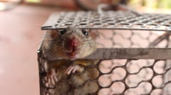 Mouse in trap Stock Footage