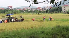 Farmers harvesting rice by machine Stock Footage