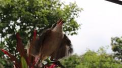 Bird in hand man Stock Footage