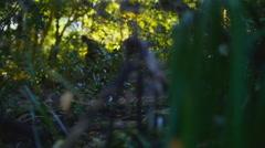 Bigfoot #9 1080p Hesitant bigfoot getting nervous Arkistovideo