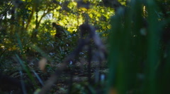 Bigfoot #9 1080p Hesitant bigfoot getting nervous - stock footage