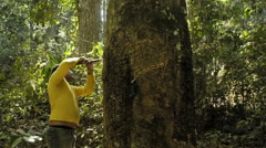 Rubber tapper in the Amazon rainforest Stock Footage
