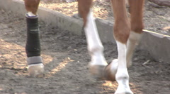 A Brown Horse Runs in Stable Stock Footage