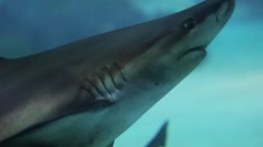 Shark swims in the waters of the red sea Stock Footage