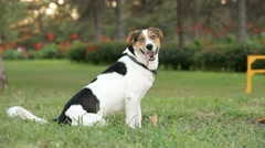 Obedient Dog Stock Footage