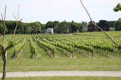 Kon to KOS ta Winery at Greenport Long Island USA Stock Photos