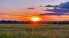 Rye field and sunset, timelapse Stock Footage
