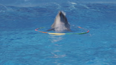 Dolphin Jump Out Hoop In Pool Stock Footage