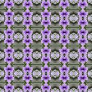 Ruellia tuberosa Linn in full bloom abstract background - stock illustration