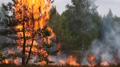 Forest fire flames - stock footage
