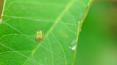 Spider on net Stock Footage