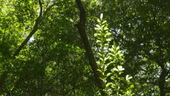 Plant in the jungle illuminated by the sun. Costa Rica. Stock Footage