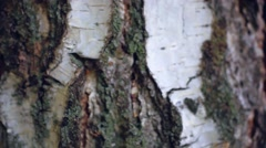 Background birch bark texture Stock Footage