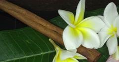 Jasmin and cinnamon on the green leafs. Macro shot - stock footage