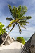 The footpath to Anse Source D'Argent in La Digue, Seychelles with palm trees  - stock photo