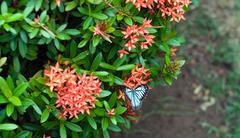 Beautiful white butterfly on exotic  flowers of tropical Climate Stock Photos