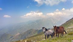The horses in the mountains in Tibet. Stock Photos