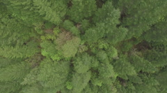 Overhead Shot of Forest Stock Footage