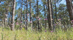 Forest glade Stock Footage