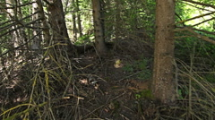 Walking through forest, steady cam shot. Personal perspective of walking - stock footage