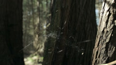 Spider in web between trees Stock Footage