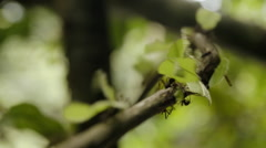 Focusing a row of ants Stock Footage