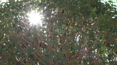 4K Sun silhouette ray tree green leaf summer hot day magical sunlight bright fun Stock Footage