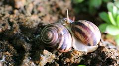 Three snails, one crawls Stock Footage