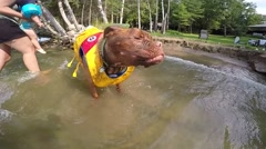 French mastiff super slow motion slober shake in the water Stock Footage