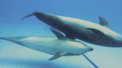 Dolphins Swimming Stock Footage
