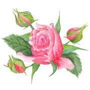 Rose Buds Botanical Illustration Stock Illustration